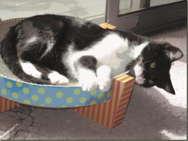 Freddie in a basket