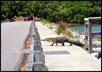 03a8d - Causeway- Gator crossing - I can beat the traffic