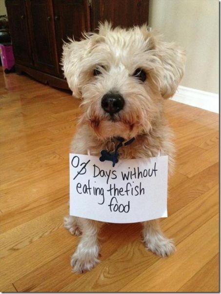 dog-shaming-bad-24
