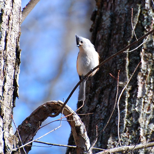 6. winter titmouse