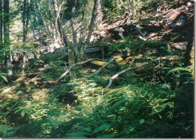 Collapsed Snowshed Ruins near Milepost 1716 on the Iron Goat Trail in 1998