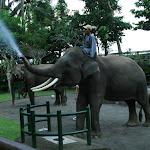 Бали. Сафари на слонах 1.jpg