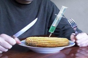alimento-modificado-transgenicos