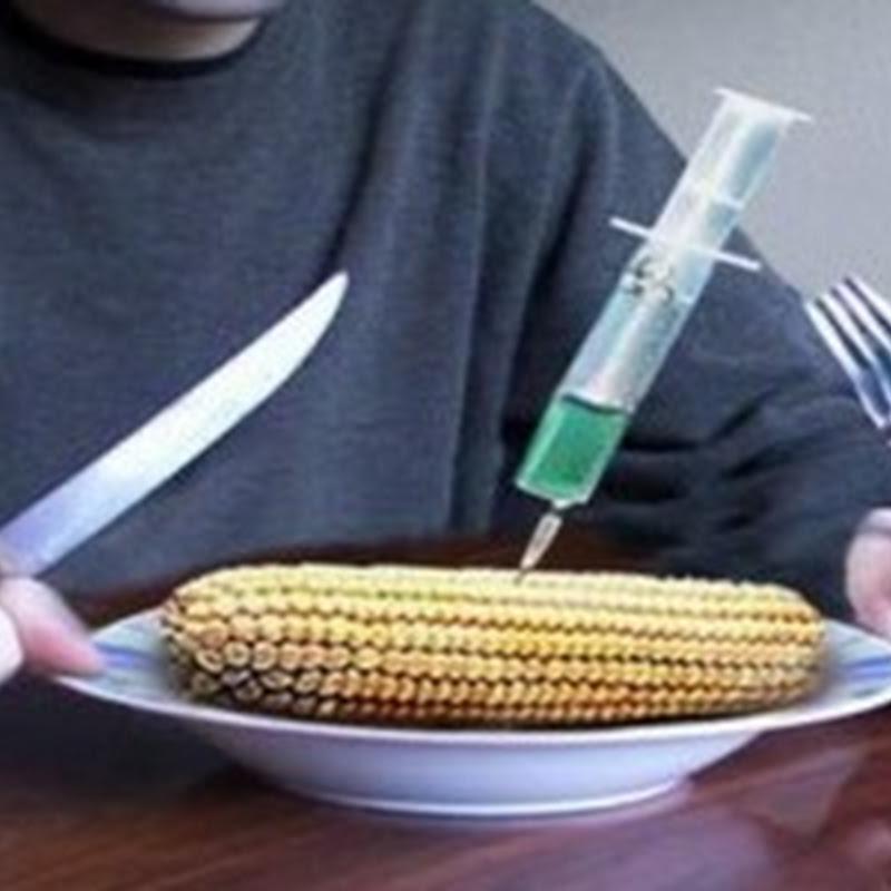 España alcanza record en cultivo de transgénicos en 2013