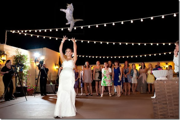 cat-toss-weddings-7