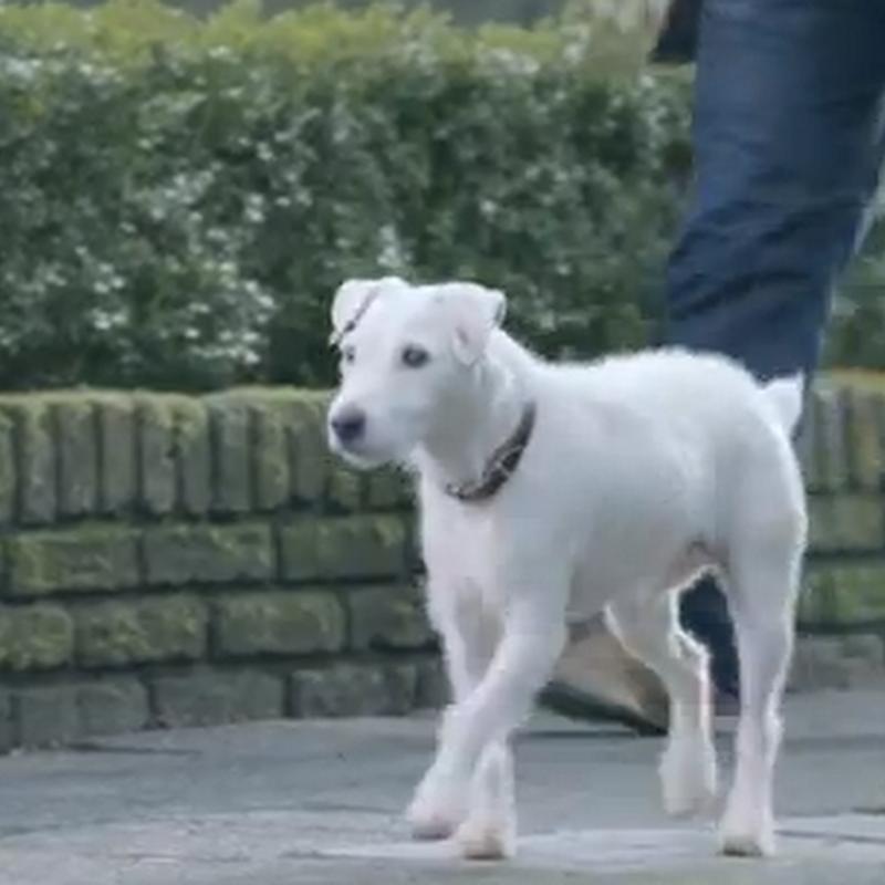 El perro el mejor amigo de VW