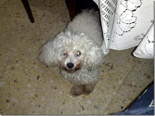 Wendy 2011 11 05 002