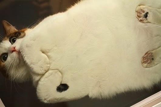 вид-снизу-коты-на-стеклянных-столах-7