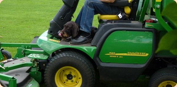 hund efter græsslåning