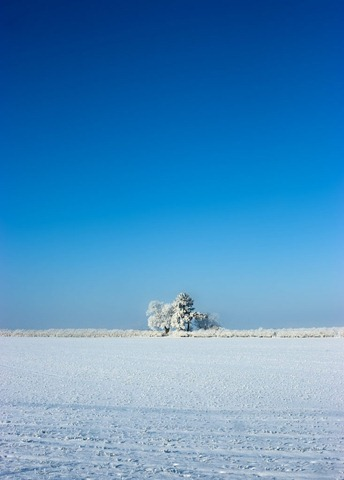 Snowy-Fields-4