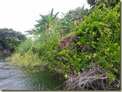 20140302_ Islet Boat vegetation (Small)
