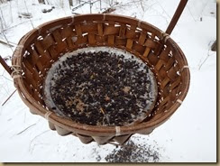 closeup of bird feeder basket with aluminum plate filled with seeds