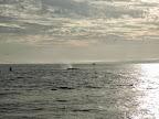 2014Jul19 MossLanding_Whales9.jpg