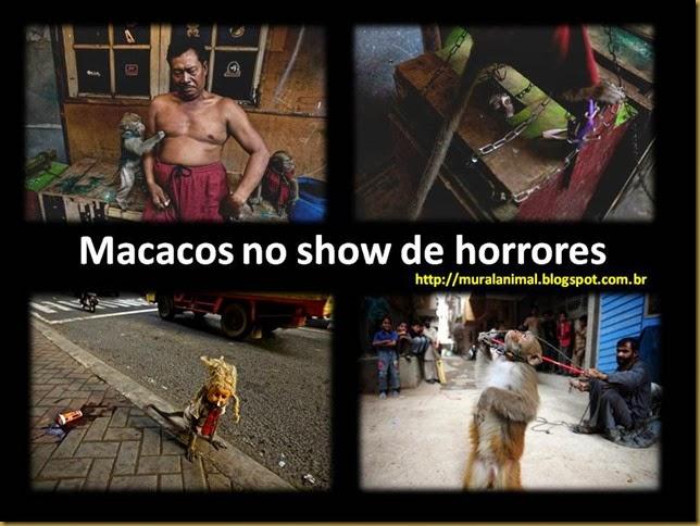 macacos_ruas2