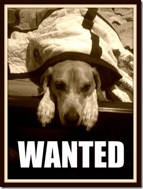 Cal wanted