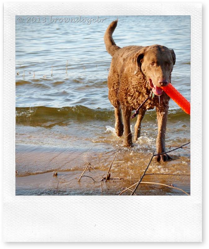 Woofs Dog Training Kia Boone