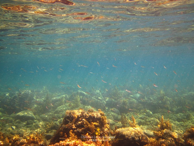 Small School of Fishes at Romblon's Malabiga Beach
