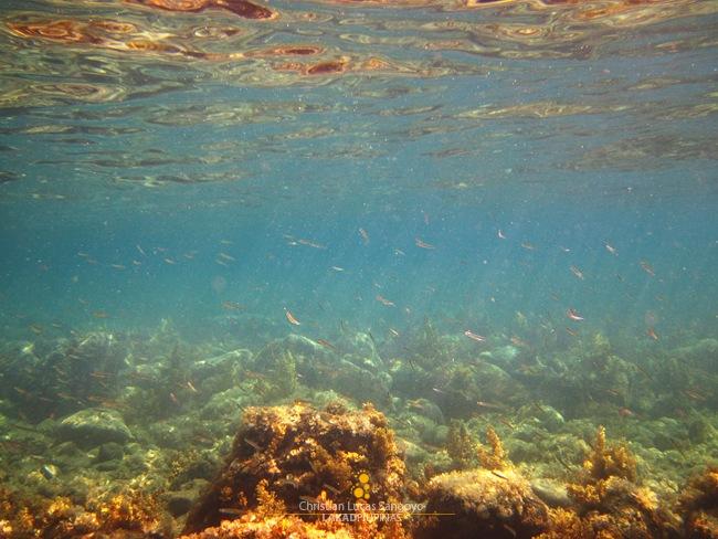 Small School of Fishes at Romblon's Malabiga Beach