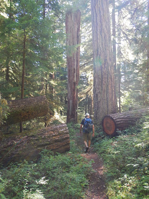 Big trees.JPG
