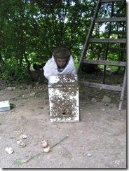 Rojení  a velikost včelstva 247