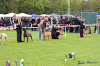 20100513-Bullmastiff-Clubmatch_31064.jpg
