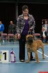 20130511-BMCN-Bullmastiff-Championship-Clubmatch-1764.jpg