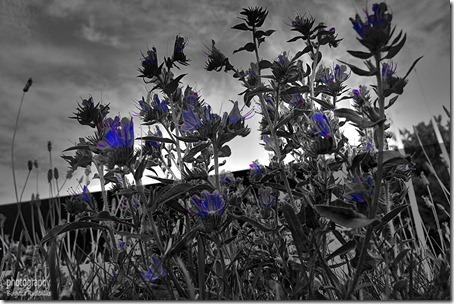 pm_20120904_blue