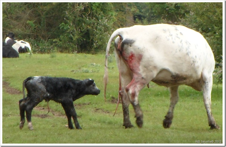SAM_1624 New born