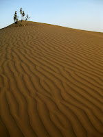 Camel Safari in the Thar Desert - Rajasthan