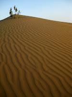 Camel Safari in the Thar Desert - Rajasthan