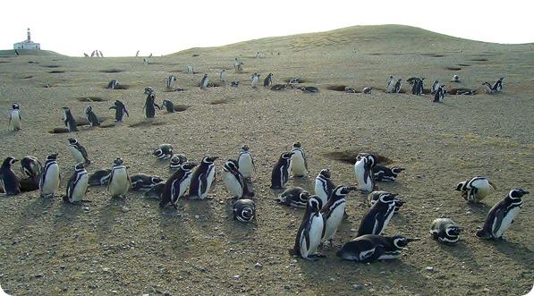 Pinguinera da Isla Magdalena