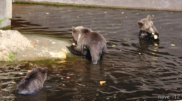 Bjørneparken 012