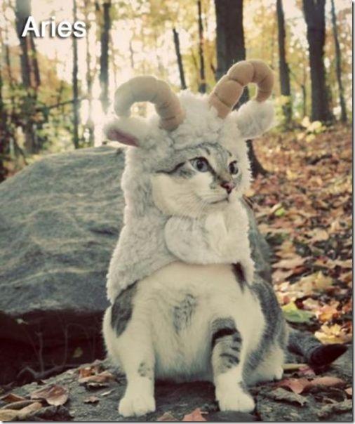 cats-signs-zodiac-7