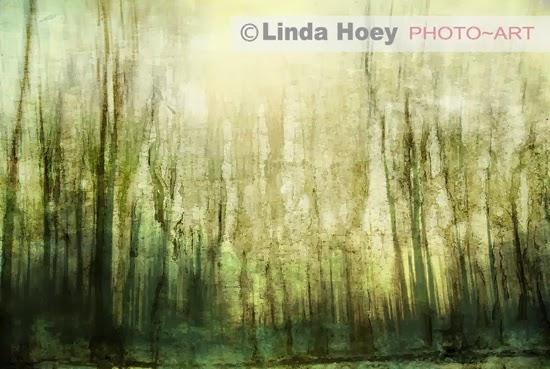 Linda Hoey