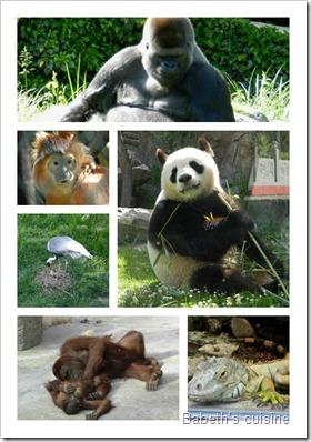PicMonkey Collage zoo