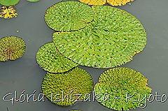 Glória Ishizaka -   Kyoto Botanical Garden 2012 - 70