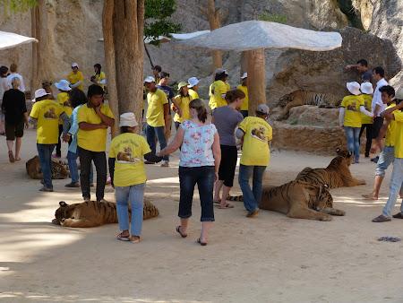 Templul tigrilor Thailanda - canionul cu tigri