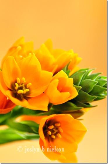 orangeflowerweb