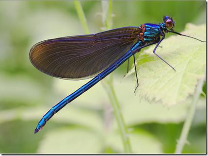 Ciri ciri invertebrata