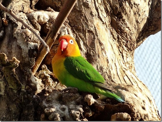 Santiago_Zoo_DSC03702