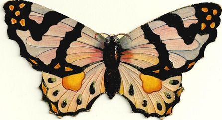 butterflyorange
