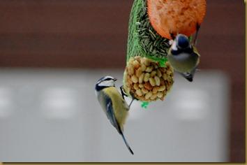 fugler oktober 015