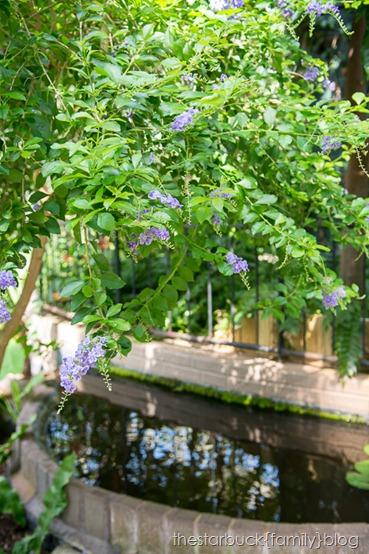 Callaway Gardens butterfly garden blog-25