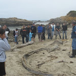 Gray Whale Unearthed