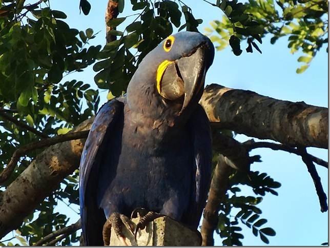 Pantanal_DSC08570