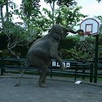 Бали. Сафари на слонах 7.jpg