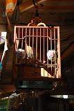Shanghai - Pets market - Cage à oiseau au soleil