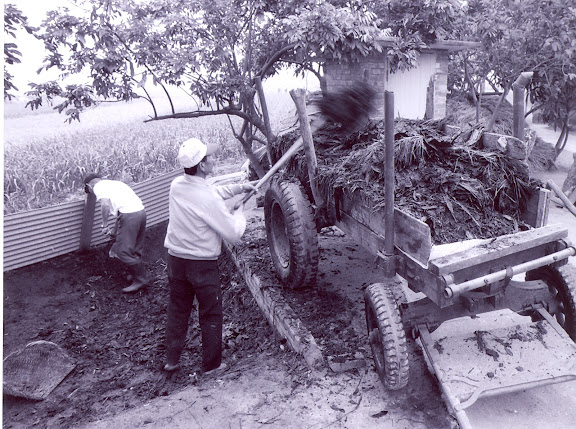 糞堆有機肥