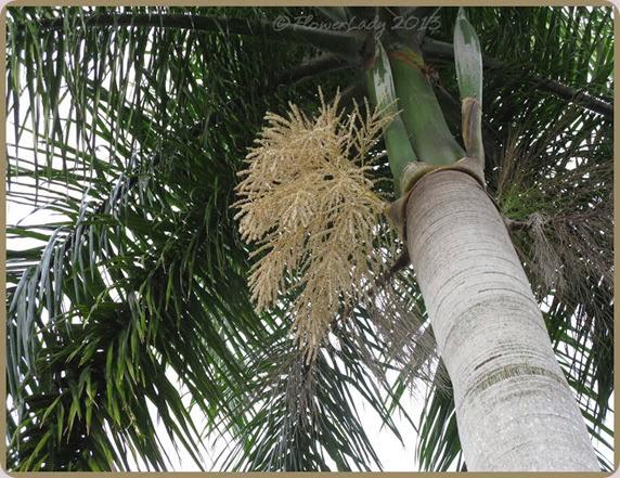 12-15-palm