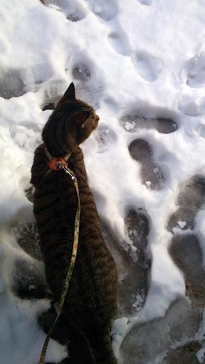 [写真]グスタフを散歩に連れ出してみた